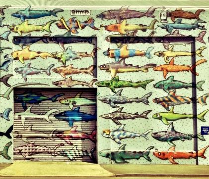 Shark Wall in Wellington